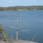 A panoramic view of Lake Nipissing from Pebble Beach Trail, a dead tree standing silver and majestic in the centre of the foreground.