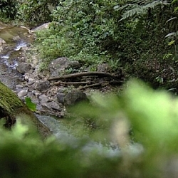 Pretty stream seen while hiking near Loja in Parque Podocarpus, Ecuador.