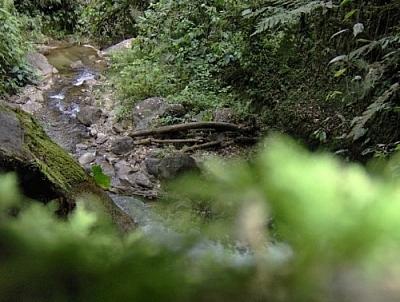 Pretty stream seen while hiking near Loja in Parque Podocarpus, Ecuador.
