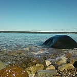 Large rock protruding from the water on the shores of Providence Bay, Manitoulin Island