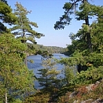 Pine trees looking over the water while hiking along the trail to Récollet Falls, French River Provincial Park