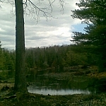Forest and lake scenery at Restoule Provincial Park