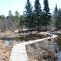 A winding boardwalk traverses a wetland along Samoset Trail in Mashkinonje Provincial Park.