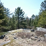 Woodsy scenery along Mashkinonje Park's Samoset Trail