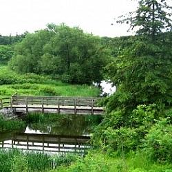 Walk in Scanlan Creek to see this quaint wooden bridge.