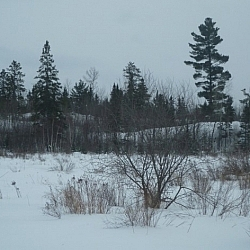 A field covered in snow while snowshoe hiking on Pine Creek trails.