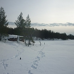 Snowshoe tracks on Lac Clair, French River area.