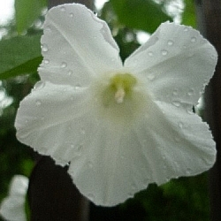 This white flower is one of many that grow along the staircase up to our apartment.
