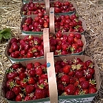 Close-up of full baskets of strawberries aligned in a row one behind the other