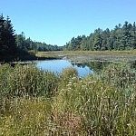The biggest island on the French River, there are lots of trails on Eighteen Mile Island.
