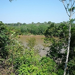 When the Tambopata River's this high, it's no good for bushwhacking at Picaflor!