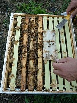 Treating mites at Creekbend Farm
