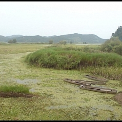 My photo journals of a Korea Wetland Keeper include this scene from Upo Marsh featuring wooden canoes.