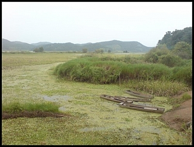 My photo journals of volunteering for the Korea Wetland Project include this scene from Upo Marsh featuring wooden canoes.