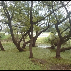 The Upo Marsh circuit hike has a few strange sights, like these trees growing from the water.