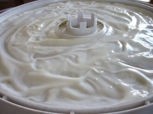 Vanilla yogurt spread out on a dehydrator sauce sheet.