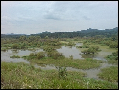 Enjoy some beautiful wetlands scenery during the Upo Marsh circuit hike.