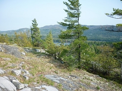 Typical wind-swept pines littering the landscape while hiking the La Cloche Silhouette Trail