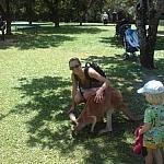 Petting a kangaroo