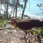 Colourful bird seen up close at Noosa National Park.