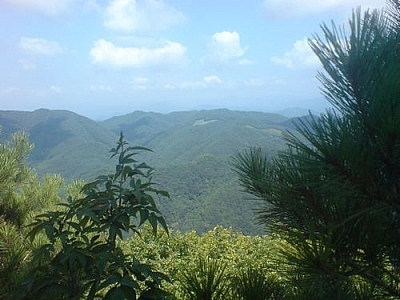 Verdant scenery from Cheongnyangsan Provincial Park, seen while hiking to make the most of a year in Korea.