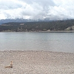 Dog on a small rocky beach in the town of Invermere.