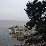 Coastal scenery at Lighthouse Park in West Vancouver.