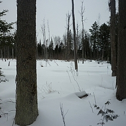 Wetland blanketed in snow.