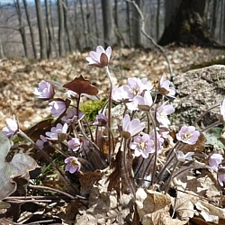 Lovely spring flowers seen while hiking at Pretty River Valley Park.