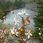 Spring flowers at Mississagi Park.