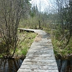A winding boardwalk on the Semiwite Lake Trail at Mississagi Park.