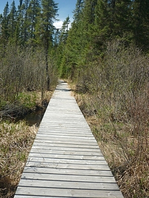 Boardwalk seen while hiking the trails at Mississagi Park.