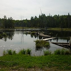 A broken boardwalk across a beaver pond seen while hiking the White Bear Forest Trails in Temagami.