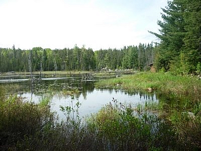 A log cabin by a beaver pond in Temagami's White Bear Forest.