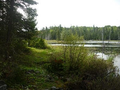 Along the Red Fox Trail in Temagami.