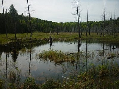A marsh in the White Bear Forest.