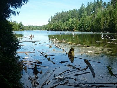 Waterside scenery seen while hiking Temagami's White Bear Forest Trails.