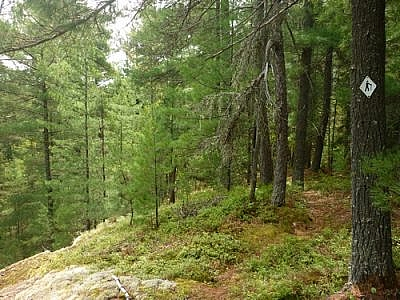 Following one of the White Bear Forest Trails in Temagami.