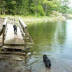 Our black labs, each going their own way at a water crossing, Maggie over the wooden bridge and Bear choosing a refreshing swim.