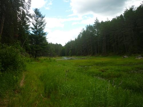 Wetland seen on the Grand Campment Bay Trail.
