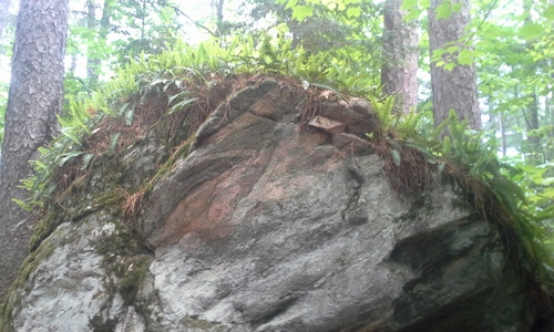 Ferns growing atop an erratic boulder along the Ottawa-Temiskaming Highland Trail.