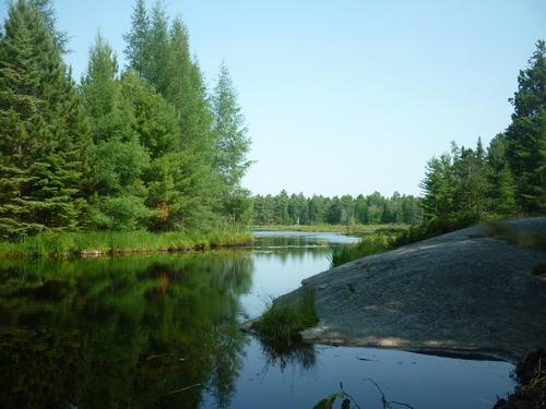 Wetland on Pioneer Trail in Noëlville.