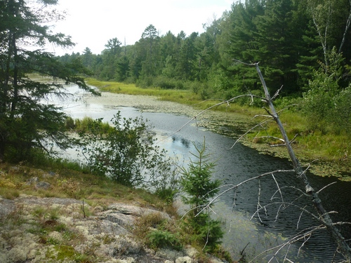 Scenery from the French River Multi-Use Trails in Noëlville.