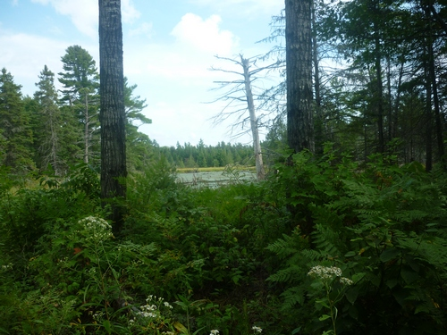 Beautiful views while walking the French River Multi-Use Trails.