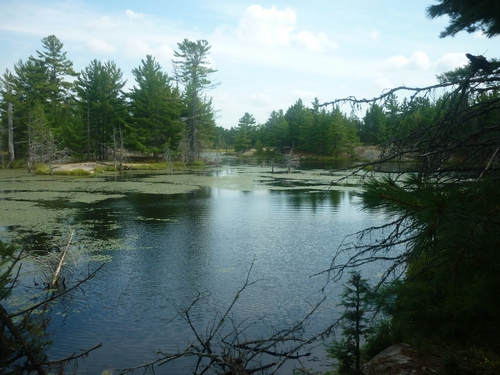 Wetland seen while walking on the Barbotte Trail in French River.