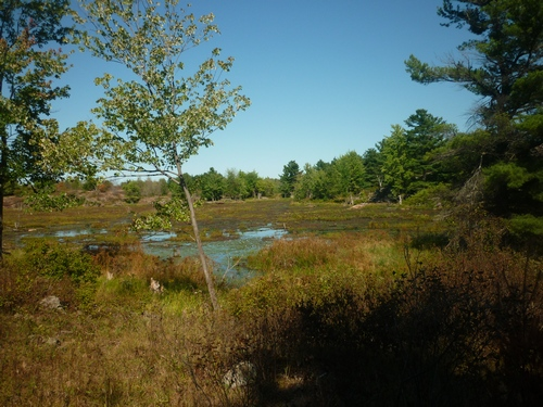 Wetland seen while hiking at Frontenac Provincial Park.