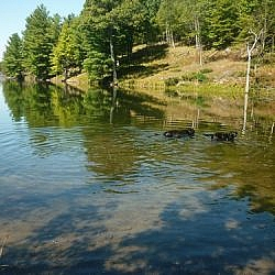 The dogs swimming at Frontenac Park.