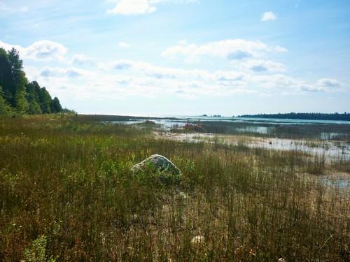 Wetland at the Misery Bay head.